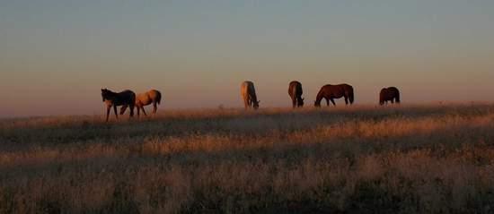 horsesatsunrise