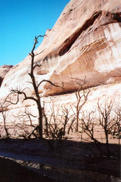 July 4, 1994  FINAL SUMMARY REPORT: Lake Powell Disaster