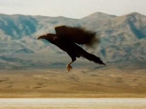 raven-deathvalley