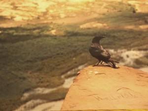 raven@hite