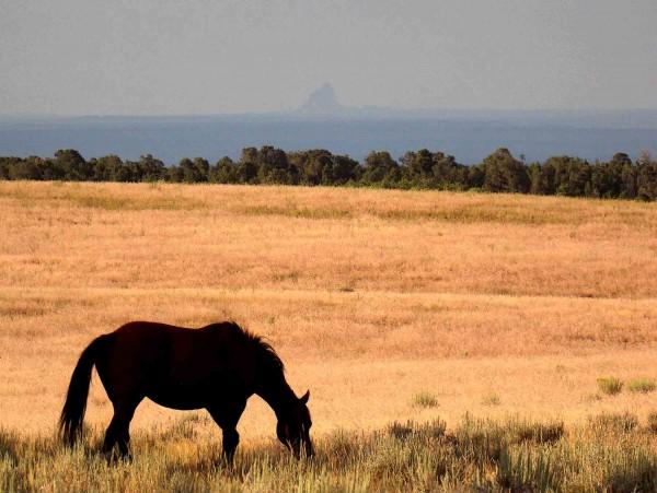 horse-shiprock2