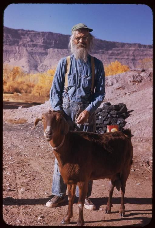 goat1000I