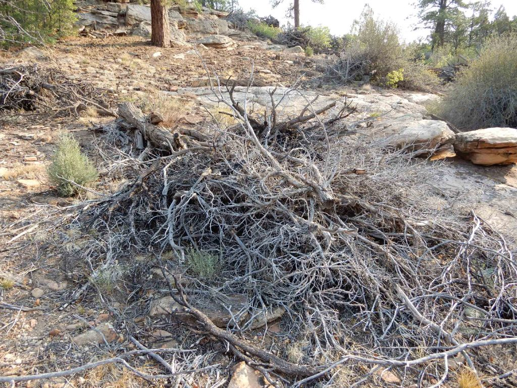 Devils Canyon slash piles
