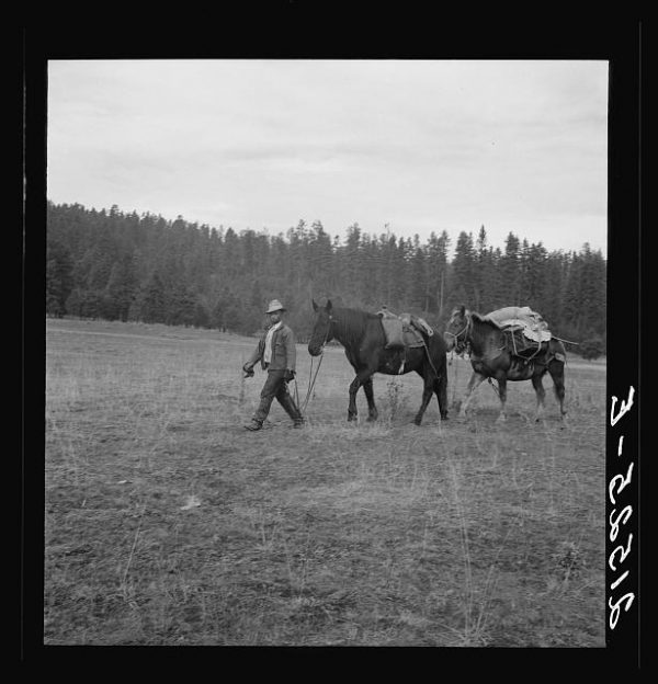 Basque sheep herder leading pack train down from summer camp in Bear Valley. Trip takes thirty-five days going up, twenty days coming down. Adams County, Idaho