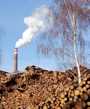 biomass energy production