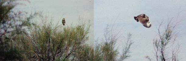 Owls at Arches. Photos by Jim Stiles