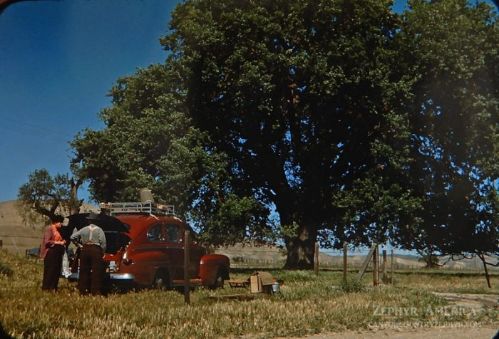 Campsite in a meadow northeast of Paso Robles, California. 1946. Photo by Herb Ringer