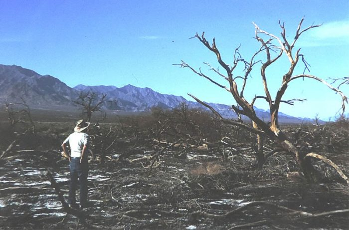 Mesquite Destruction at Death Valley. 1988. Photo by Jim Stiles.