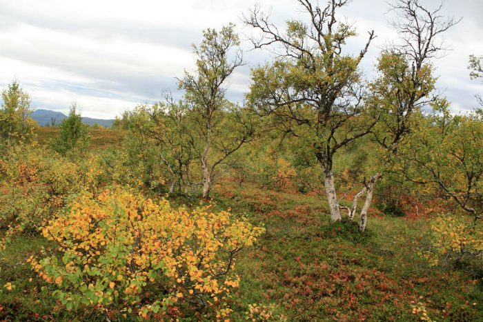 Høst. Photo by Damon Falke