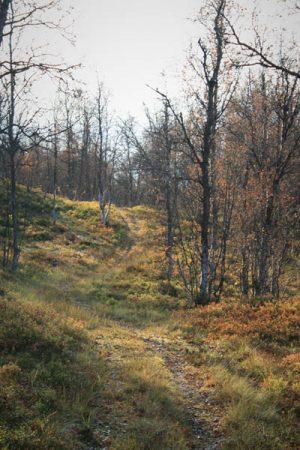 Leaves in the Footpath. Photo by Damon Falke