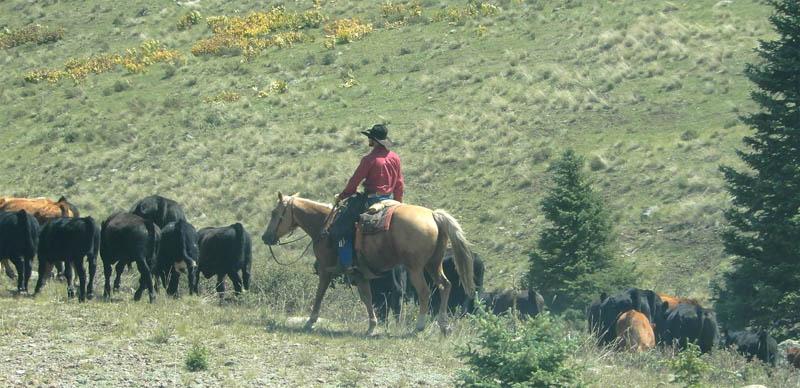 Cumbres Cowboy. Photo by Jim Stiles