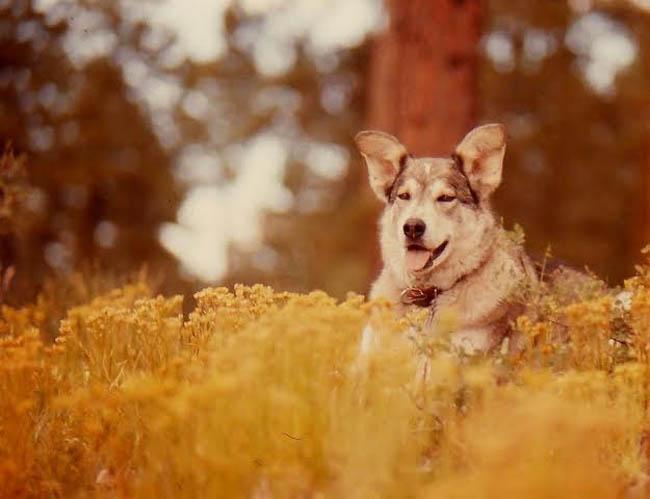 Muckluk the Wonder Dog. Photo by Jim Stiles